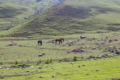 Pasto de caballos en las montañas imagen de archivo libre de regalías