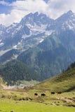 Pasto de caballos en las montañas fotos de archivo