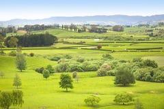 Pasto de la granja en Nueva Zelandia imagen de archivo libre de regalías