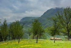 Pasto de la hierba verde con los árboles y ovejas en el parque nacional i de Tara Imágenes de archivo libres de regalías