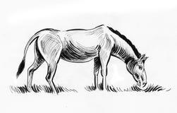 Pasto de la mula stock de ilustración
