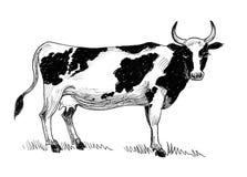 Pasto de la vaca stock de ilustración