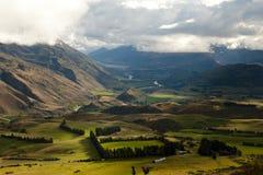 Pasto de las ovejas - Nueva Zelanda Foto de archivo libre de regalías