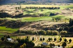 Pasto de las ovejas - Nueva Zelanda Fotografía de archivo libre de regalías
