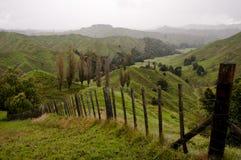 Pasto de las ovejas - Nueva Zelanda Imagenes de archivo