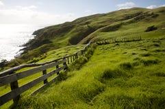 Pasto de las ovejas - puerto Jackson - Nueva Zelanda Fotografía de archivo libre de regalías