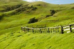 Pasto de las ovejas - puerto Jackson - Nueva Zelanda Fotografía de archivo