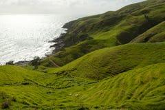 Pasto de las ovejas - puerto Jackson - Nueva Zelanda Foto de archivo libre de regalías