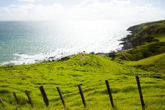 Pasto de las ovejas - puerto Jackson - Nueva Zelanda Imágenes de archivo libres de regalías