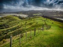 Pasto de ovejas en Nueva Zelanda Imagen de archivo libre de regalías