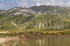 Pasto de vacas Fotografía de archivo libre de regalías