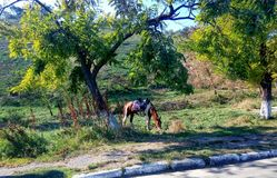 Pasto del caballo Fotos de archivo libres de regalías