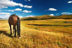 Pasto del caballo Fotografía de archivo libre de regalías