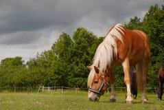 Pasto del caballo, primer Fotografía de archivo