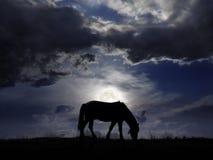 Pasto en el claro de luna Imagen de archivo libre de regalías