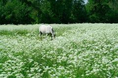 Pasto en el prado blanco Imágenes de archivo libres de regalías