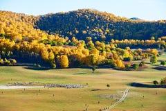 Pasto en el prado del otoño Fotos de archivo libres de regalías