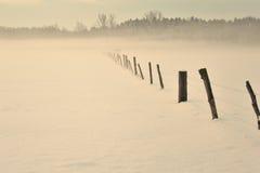 Pasto en invierno Imagen de archivo