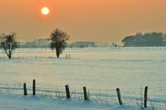 Pasto en invierno Imagenes de archivo