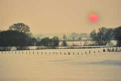 Pasto en invierno Fotografía de archivo libre de regalías