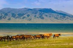 Pasto no platô, cavalo ao redor Fotografia de Stock