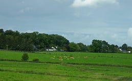 Pasto verde Fotos de Stock Royalty Free