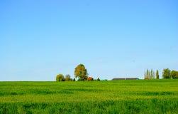 Pasto verde Fotografia de Stock