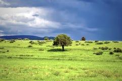 Pasto verde Imagen de archivo