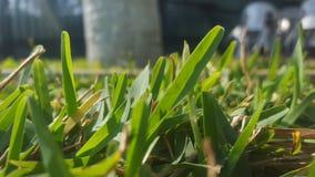 Pasto verde Fotografering för Bildbyråer