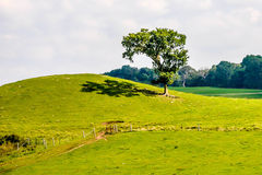 Pasto verde luxúria com uma árvore solitária Imagem de Stock Royalty Free