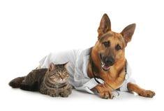 Pastor alemán con el estetoscopio vestido como el veterinario doc. y gato imagen de archivo