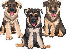 Pastor alemán del perro de perritos Fotos de archivo