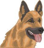 Pastor alemão da raça do cão do vetor Imagens de Stock Royalty Free