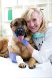 Pastor alemão Dog que obtém a atadura por um veterinário imagem de stock