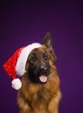 Pastor alemão em um chapéu do Natal Fundo roxo Imagem de Stock Royalty Free