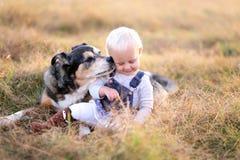 Pastor alemão Miz Breed Dog que beija o bebê no mordente imagem de stock royalty free
