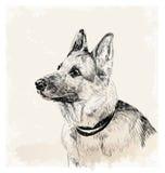 Pastor alemán Dog Fotografía de archivo