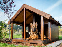 Pastor alemán en su perrera Imagen de archivo