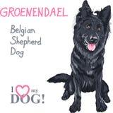 Pastor belga Dog, raza del perro de Groenendael Imagen de archivo libre de regalías