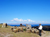 Pastor con la manada en Isla del Sol, Bolivia Fotos de archivo