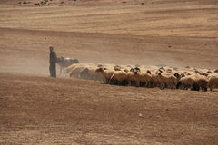 Pastor de Jordão Foto de Stock