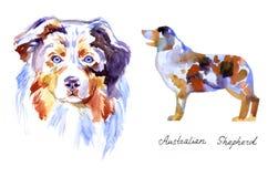 Pastor del australiano de la acuarela Perro en el fondo blanco Imágenes de archivo libres de regalías