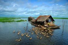 Pastor del pantano del pato fotografía de archivo libre de regalías
