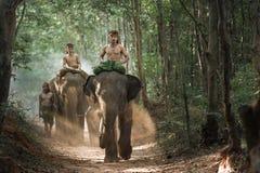 Pastor Elephant del Mahout en bosque Imagen de archivo libre de regalías