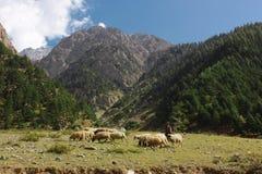 Pastor joven con sus corderos en las montañas Imágenes de archivo libres de regalías