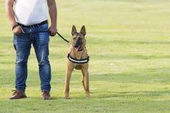 Pastor oriental Dog Foto de Stock