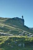 Pastor que mira las ovejas Fotografía de archivo libre de regalías