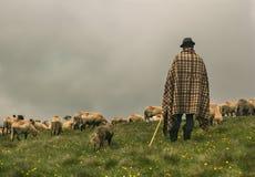 Pastor y su multitud de ovejas Imágenes de archivo libres de regalías