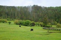 Pastoraal landschap Royalty-vrije Stock Afbeelding
