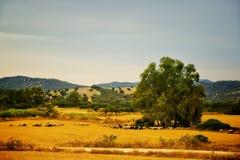 pastoral fotografia stock